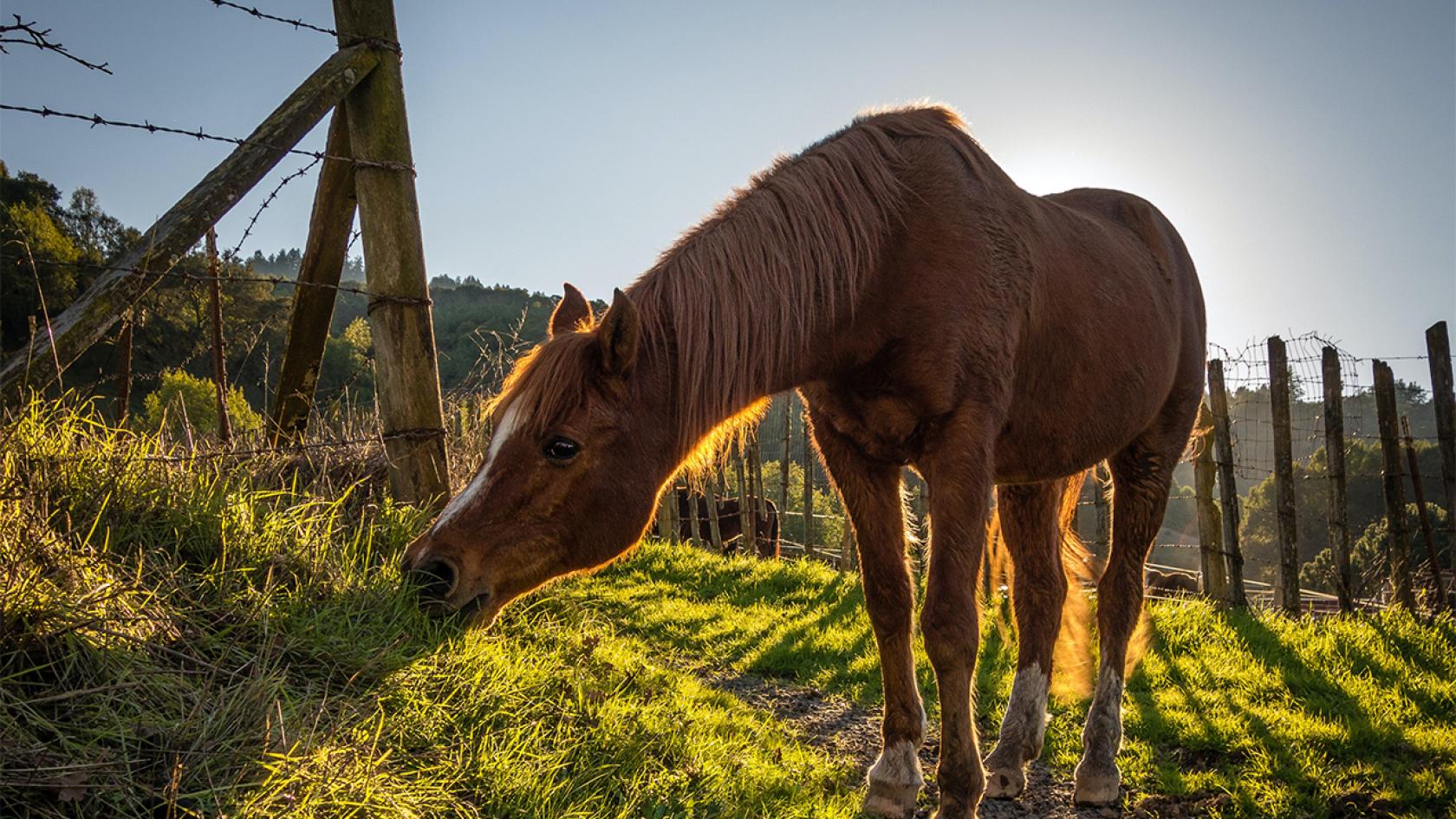 Saját ló vásárlása